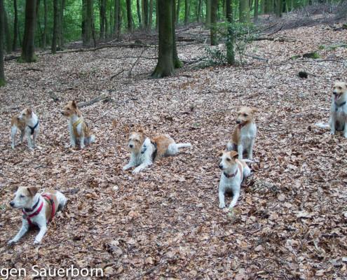 Ein Kromi steht im Walde ... Gruppenfoto